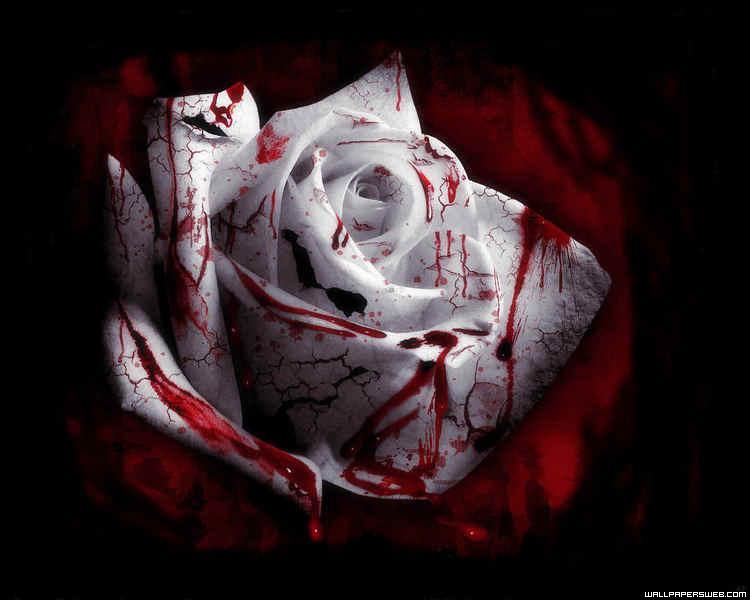 Bloody White Rose