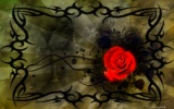 Backgrounds of gothic roses